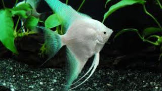 Top 15 freshwater aquarium fish.