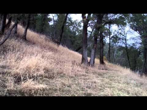 Quail Hunting At Cache Creek