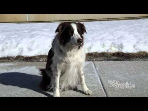 Forward Collision Warning (FCW)– With Rick & Scout