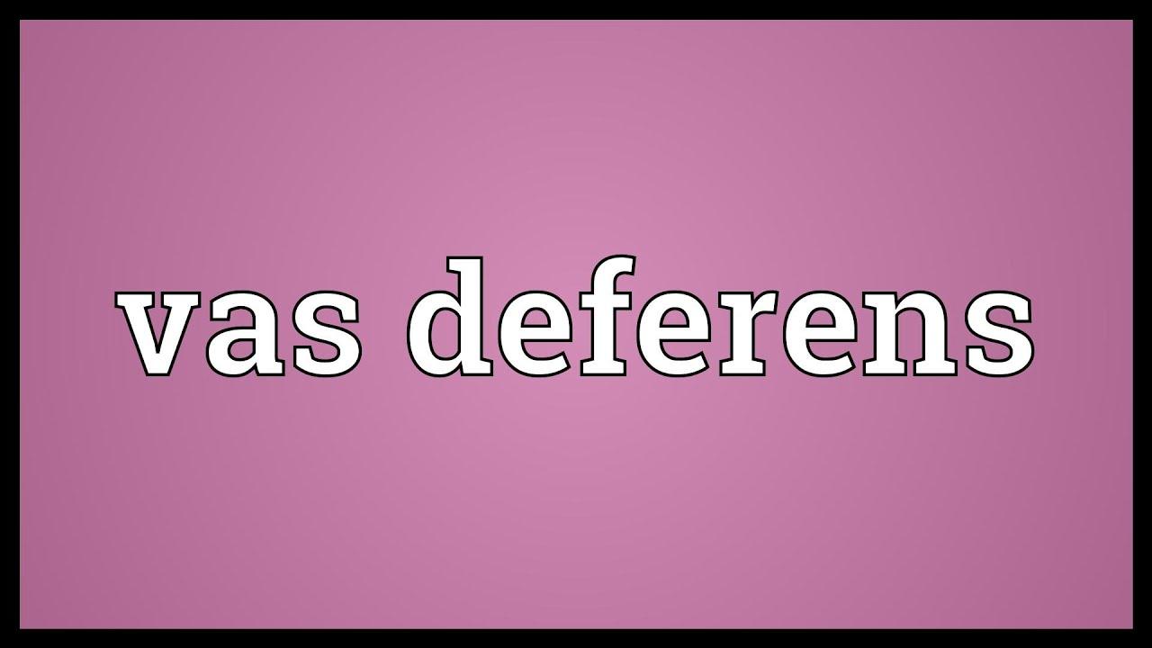 Vas Deferens Meaning Youtube