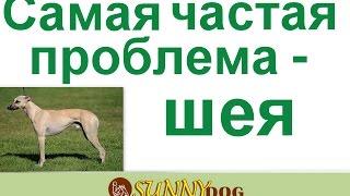 Самая частая проблема  - Шея  Зажатая  шея и  пес не поднимает голову при рыси или рядом