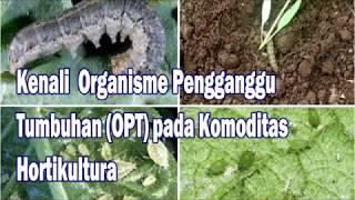 DR OZ INDONESIA - Kulit Kering Menyebabkan Cepat Tua (04/03/16).