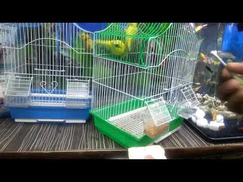 How To Attach A Cuttle Bone To A Bird Cage