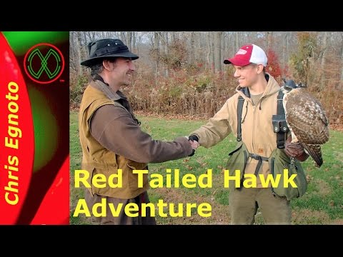 A Taste of Falconry with a Red Tailed Hawk
