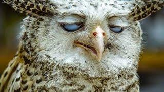 самое смешное видео про животных смотреть онлайн, смешное видео про испуги