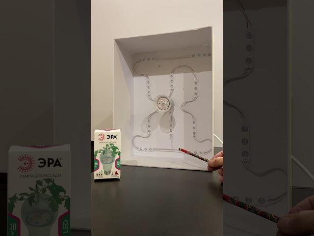 светильник для рассады собственными руками в домашних условиях