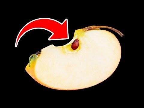 Что Будет, Если Случайно Съесть Яблочные Косточки?