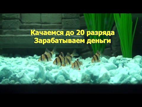 Русская Рыбалка 3.99 Качаемся до 20 разряда и зарабатываем первые деньги. Альтернативный метод