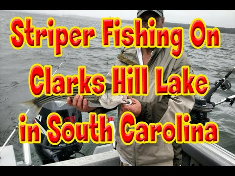 Catching Stripers on Clarks Hill Lake in South Carolina