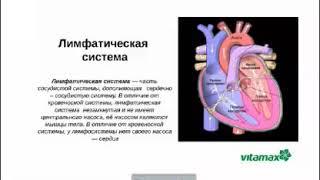 ЛИМФОМАКС – новий продукт ВИТАМАКС для очищення лімфи. О. Н.Клименко, 26.11.18