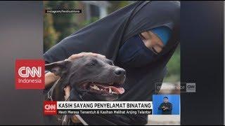 Wanita Berhijab Penyelamat Anjing Kasih Sayang Penyelamat Binatang
