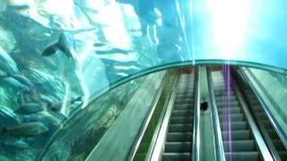 Эскалатор под крокодилом (шанхайский океанариум, 2010)(В сентябре 2010 года сотрудники редакции журнала «Потребитель» съездили в командировку в китайский Шанхай...., 2011-01-31T16:33:26.000Z)