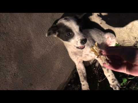 Bali Dog Rescue Billie by Mission Paws'ible