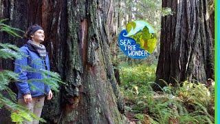 Giant Coast REDWOODS - Experience Inspiring Wonder & Magic