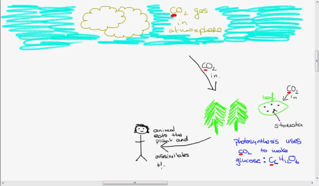Leaving cert biology the carbon cycle youtube ccuart Image collections