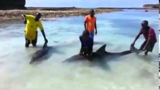 Dolphins beached in Somalia rescued.