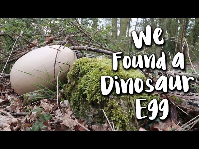 WE FOUND A DINOSAUR EGG!! | Nomadidaddy