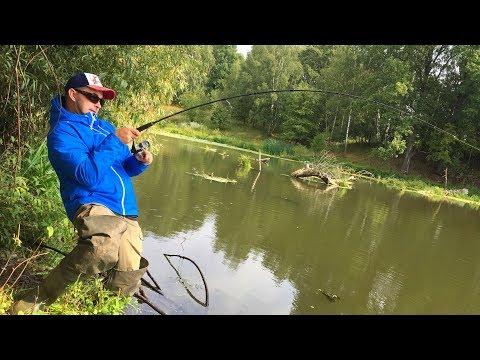 Вот так рыбалка! Этот лесной пруд таит много сюрпризов! Рыбалка по-Русову