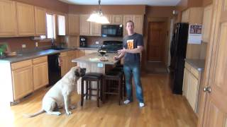 How A Dog Should Behave Around Food.  Suburban K9 Dog Training