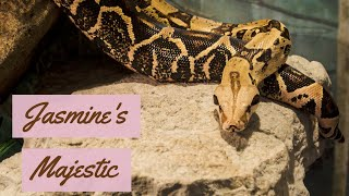 Tamara & Jasmine's Majestic Enclosure