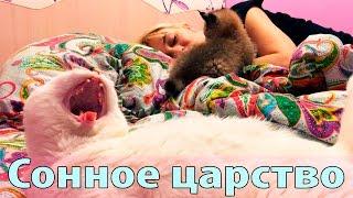 Котенок рыси круглые сутки не дает спать нам и коту, на видео редкий момент отдыха