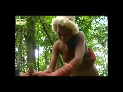 Bio Piraten ...  Ausbeutung indigener Völker...   Doku