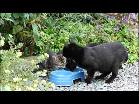 Meet my family - stray cat brings her kittens to be fed.