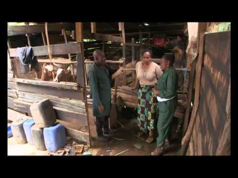 Shamba Shape Up Sn 05 - Ep 02 Chickens, Post-Harvest Losses, Cows (Swahili)