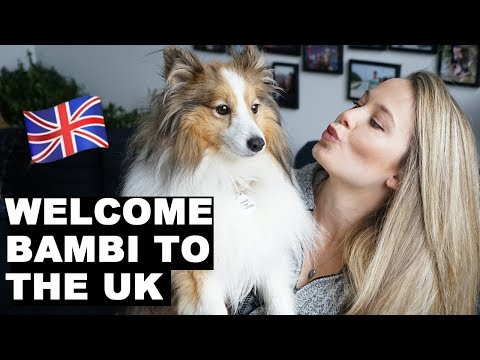 Welcoming Bambi To London | How To Fly Pet Internationally | Flying My Dog To The UK | Puppy Haul