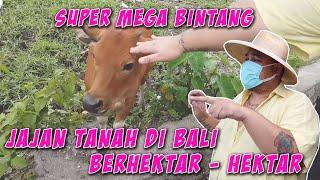 Super Mega Bintang Jajan Tanah Di Bali Sampai Berhektar Hektar