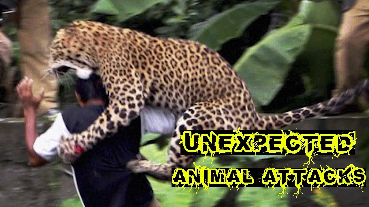 UNEXPECTED Animal ATTACKS!
