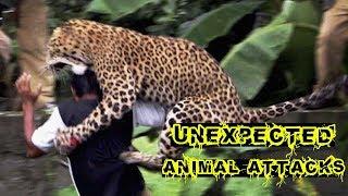 UNEXPECTED Animal ATTACKS! 🦁🦁 Amazing WILD Animal Encounters 🦁🦁 Wildest Animal Moments