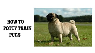 How To Easily Potty Train Pugs