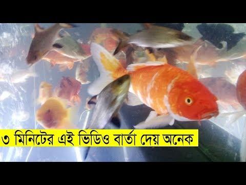 কষ্টের মাঝেও নিজেকে ভালো রাখুন | Aquarium Fish | অ্যাকুরিয়াম | একুরিয়ামে | Change Bangla