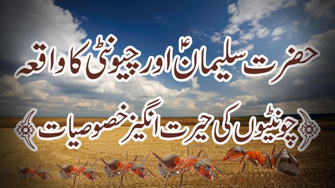 Download Hazrat Suleman A.S or Chunti ka waqia/History in urdu/hindi. Historical documentary of Sukeman A.S