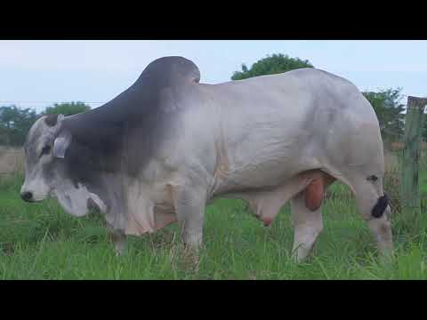 LOTE 009   GPO A 3086