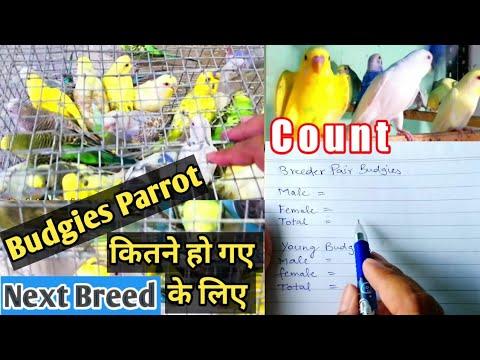 Koel bird singing sound - Cuckoo Song - കുയില്നാദം - कोयल की आवाज - Koyal ki awaz from YouTube · Duration:  1 minutes 36 seconds