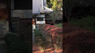 富田林市にある龍泉寺に行って参りました! 龍泉寺の門をくぐると、 ス...