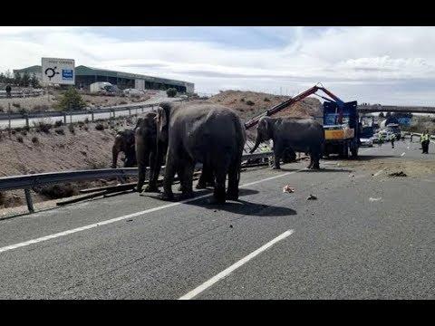 Un camión que transportaba elefantes vuelca en la A-30 a su paso por Albacete