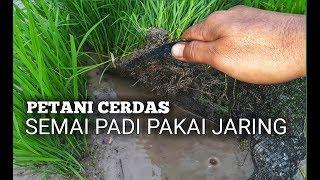 Download lagu Petani CERDAS!! Semai padi pakai Jaring #TRENDING10