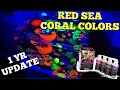 Red Sea Coral Color (1Yr Update)