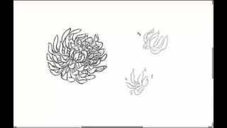How To Draw Chrysanthemum