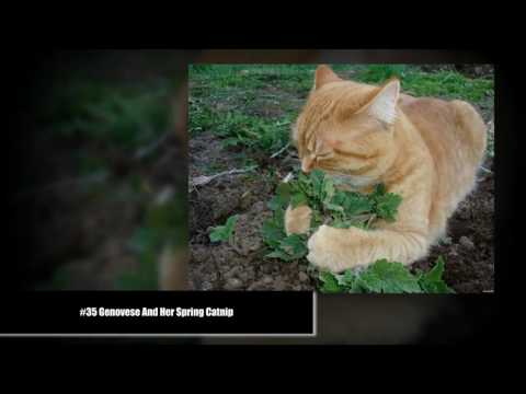 humor 10+ Times Cats Found Catnip, And Cat.exe Stopped Functioning
