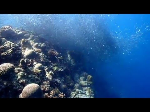 OLYMPUS TG-4 + PTWC-01 TEST -Free Diving in Tañon Strait - Ming Chen