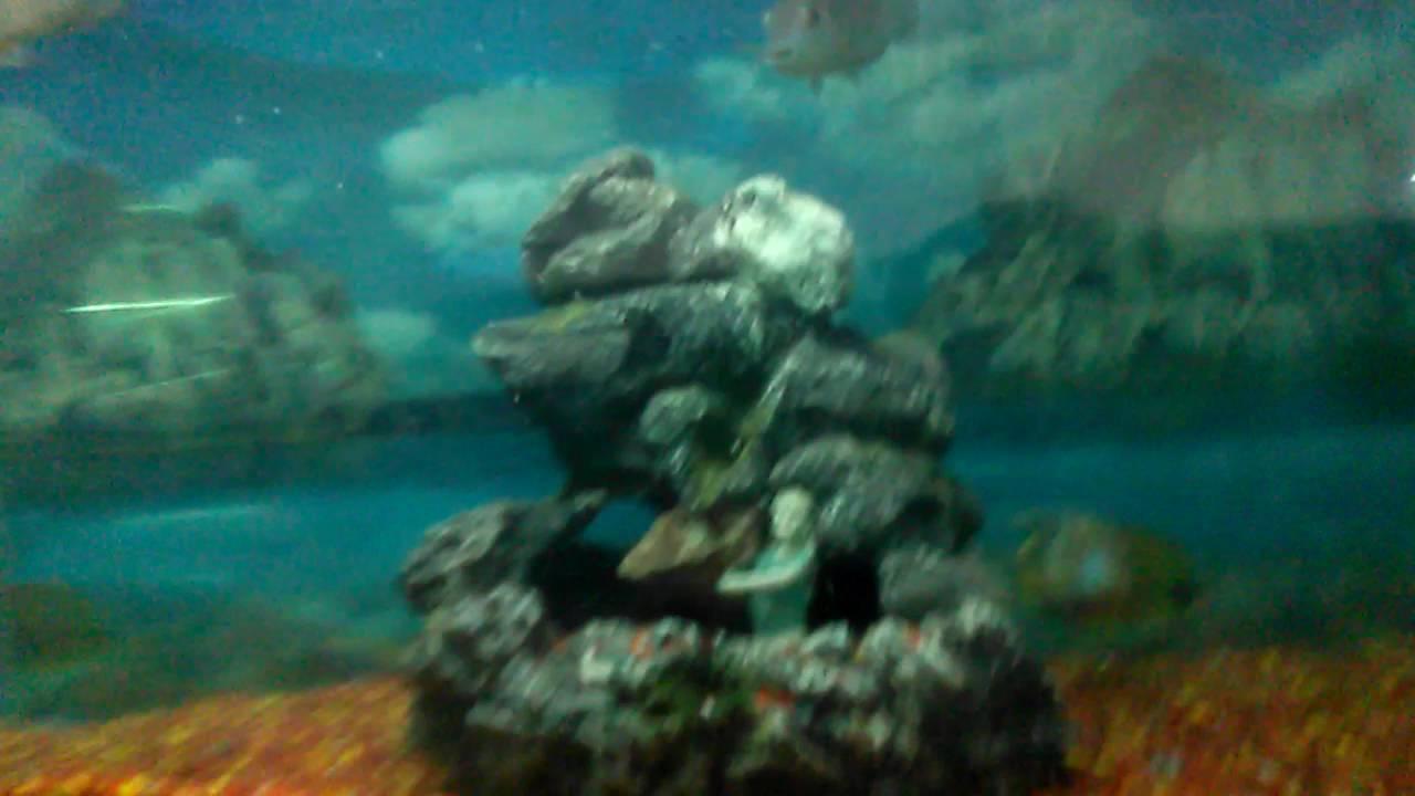 Fish aquarium in surat timings - Machli Ghar