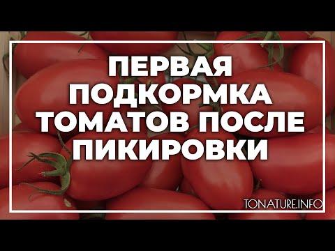 Первая подкормка томатов после пикировки   toNature.Info