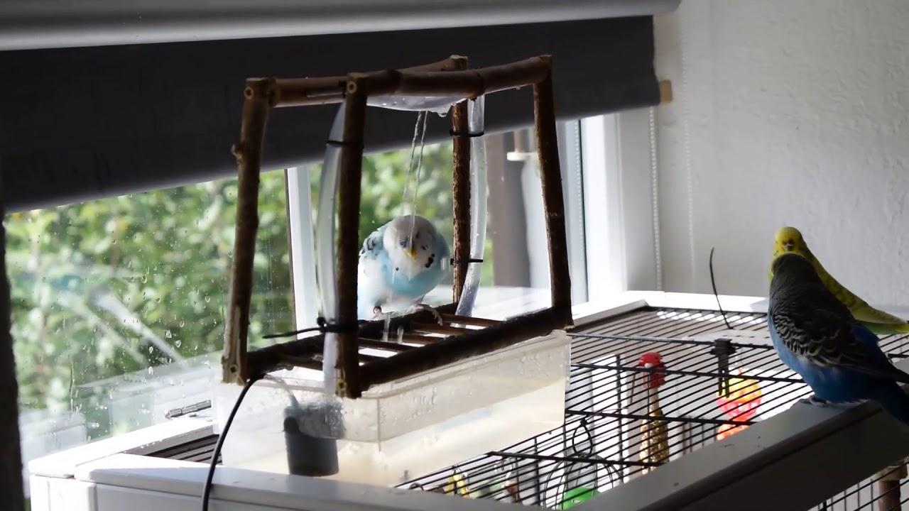 Wellensittich Klettergerüst : Vogeldusche für wellensittiche und vögel selbst bauen youtube
