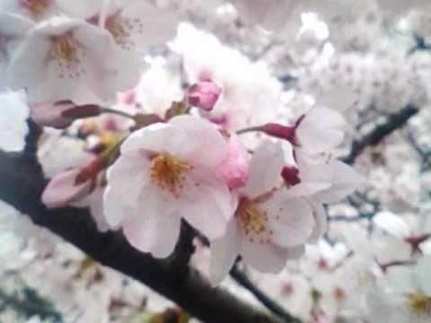 SAYONARA-八木さおり
