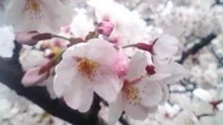 1988年公開 パンダ物語(熊猫的故事)の主題歌 作詞:松本隆 作曲:細野...