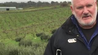 Chris Ringland, Owner & Winemaker for Chris Ringland, Barossa Valley